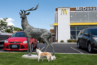 Two regal beasts outside McDonalds in Idaho